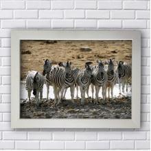 Quadro Decorativo de Zebras
